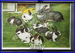 Vintage pull-down wall chart picture poster rabbit bunny coney family